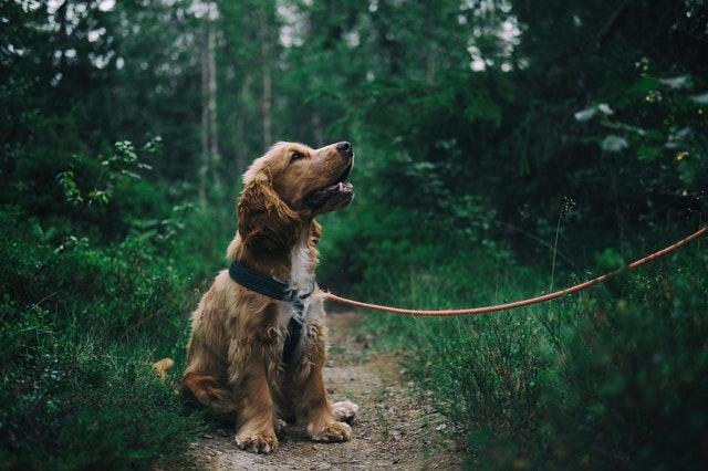 Belangrijk bij het steppen met hond